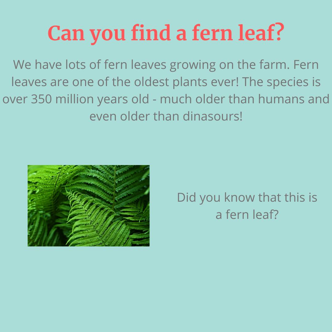 No.2: Find a Fern Leaf