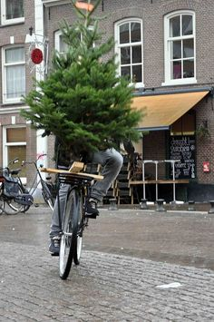 Transporting your Christmas Tree