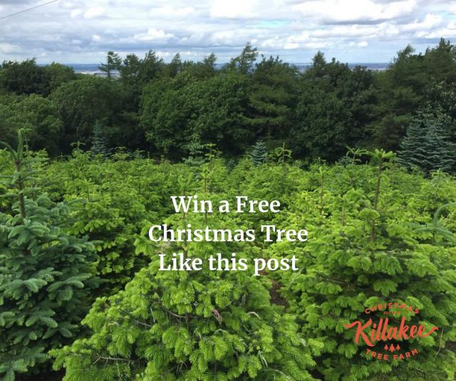 Win a Free Christmas Tree
