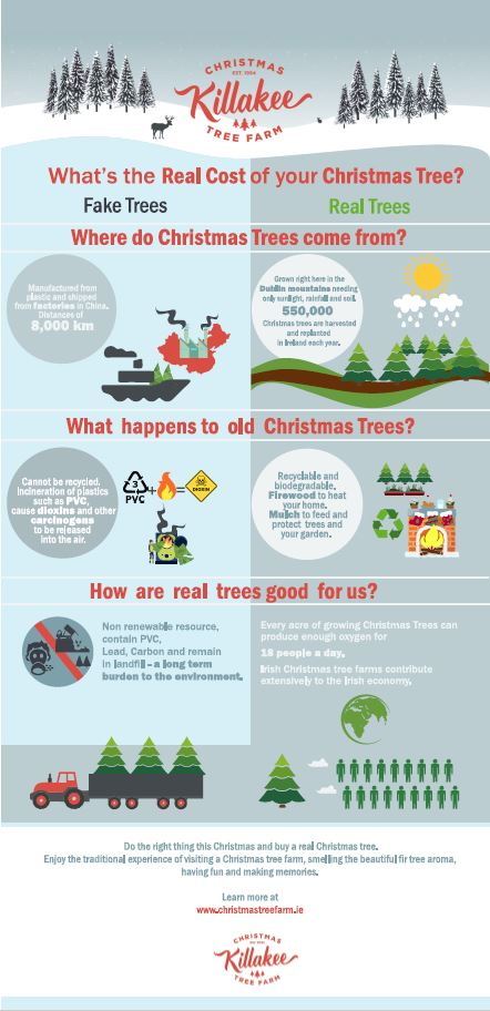 What's the Real Cost of your Christmas Tree