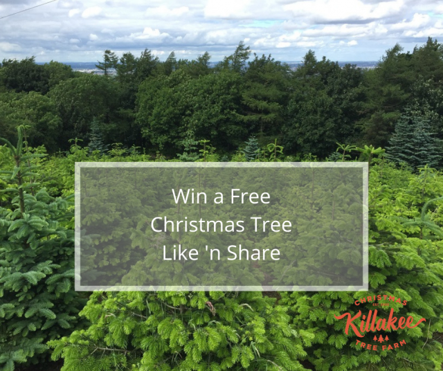 Win a Free Christmas Tree